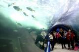 《想象力的展示会—2012韩国丽水世博》
