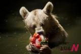 夏季里,冰糕是最爱