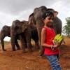 斯里兰卡野生动物保护区域