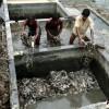 孟加拉制革工人面临健康威胁