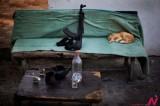 加沙地带安检处枪支旁熟睡的猫咪宝贝